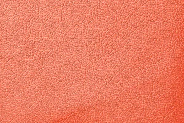 coral6B0A4882-701C-2120-A99D-D2995904F64A.jpg